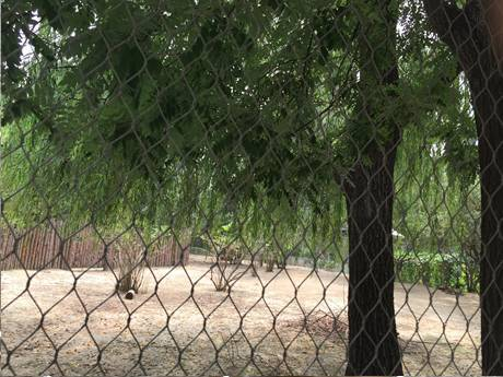 Stainless steel rope mesh with diamond holes beside two trees in the zoo.
