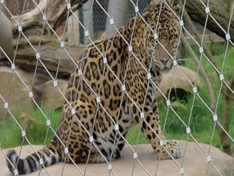 There is ferrules wire rope mesh with a leopard inside.