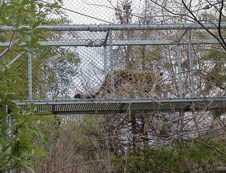 There is a cubic rope mesh leopard passageway.