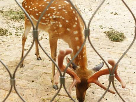 There is wire rope mesh with ferrules around a deer.